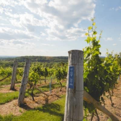 Gouveia-Vineyards-Wallingford-CT